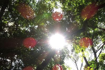 Sonne scheint durch die Blätter